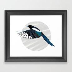Magpie in Flight Framed Art Print