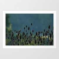 Cat tails in the morning Art Print