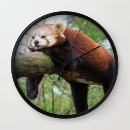 Extremely Cute Little Red Panda Sleeping Lenghtways Tree Branch Close Up Ultra HD Wall Clock