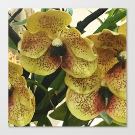 Yellow Tropical Orchids Floral Art Canvas Print