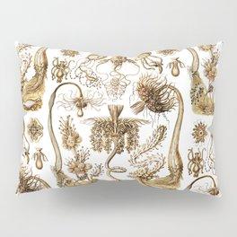 Ernst Haeckel - Tubulariae Pillow Sham