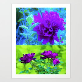 Purple Peony and Roses Garden Collage 002 Art Print