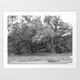 Mossy Oak Art Print