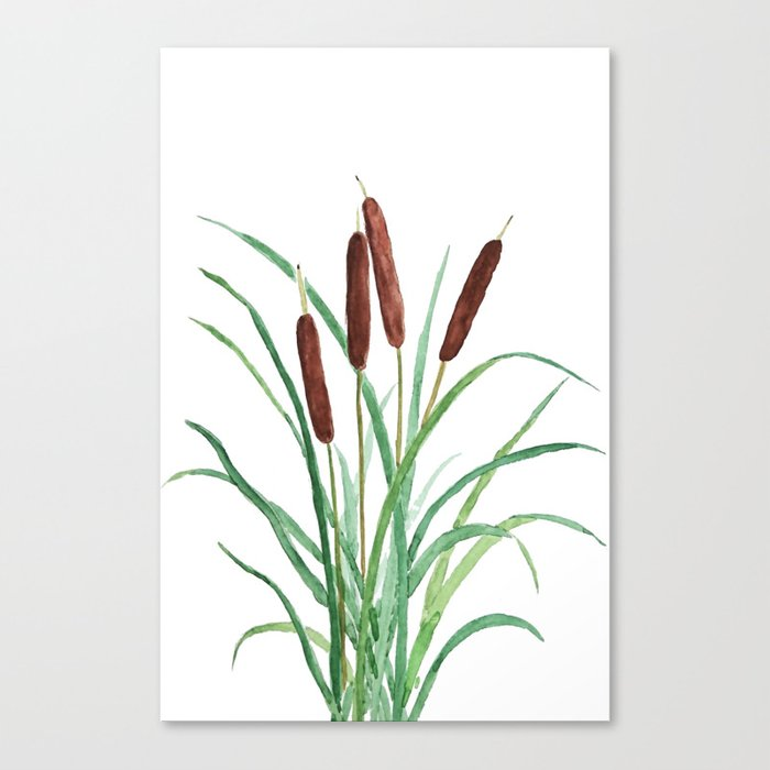 cattails plant canvas print by colorandcolor society6