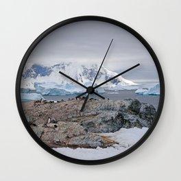 Gentoo Penguins Wall Clock