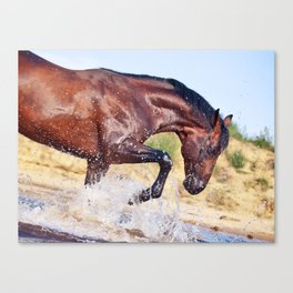 horse collection. Trakehner. swimm Canvas Print