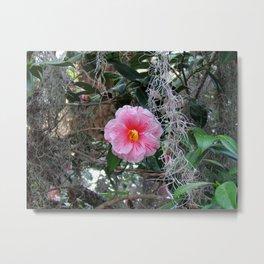 Southern Pink Camellia Metal Print