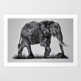 Pen & Ink Elephant Art Print