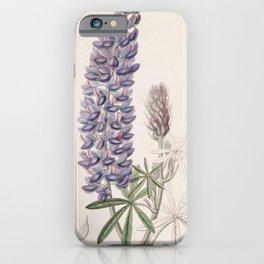 Flower 038 lupinus leptocarpus Slender fruited Lupine23 iPhone Case