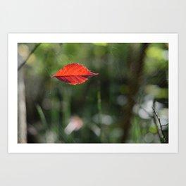 Red Leaf Caught Art Print