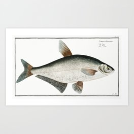 Baller-Carp (Cyprinus Ballerus) from Ichtylogie ou Histoire naturelle generale et particuliere des p Art Print