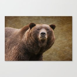 Brown Bear Stare Canvas Print