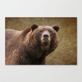 Brown Bear Stare Canvas Print