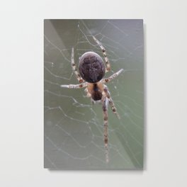 Spider on Orb Web Metal Print