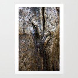 waxed oak 1 Art Print