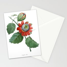 HIGHEST QUALITY botanical poster of Passiflora Alata Stationery Cards