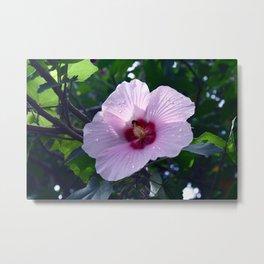 Costa Rican Hibiscus I Metal Print