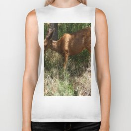 Mule Deer At Zion Park Biker Tank