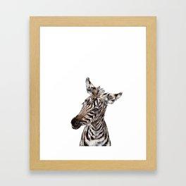 Baby Zebra Framed Art Print