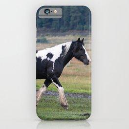 Gypsy Vanner Horses 0096 - Colorado iPhone Case