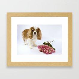 Cavalier King Charles Spaniel With Pink Roses Framed Art Print