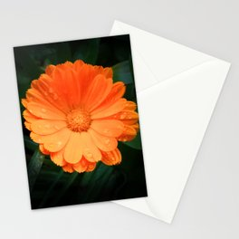 Captivating Calendula Stationery Cards