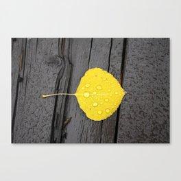 Water Droplets on Aspen Leaf Canvas Print
