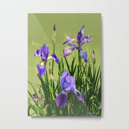 Wild Blue Flag Irises Metal Print