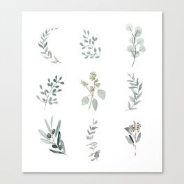 Botanical elements Canvas Print