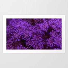 Purple Queen Anne's Lace Landscape Art Print