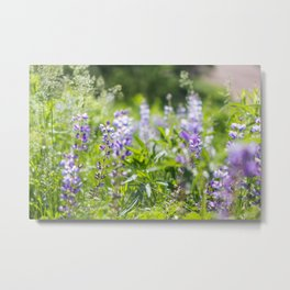 When the Lupine Blooms Metal Print