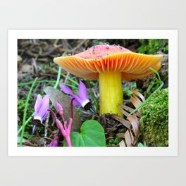 Shooting Stars and Waxy Cap Nature Scene Art Print