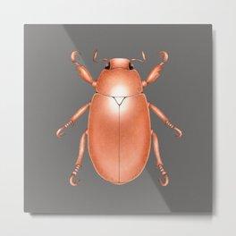 Copper Beetle Metal Print