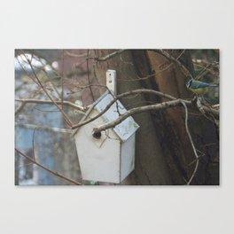 Blue tit inspects a neighbors bird house Canvas Print