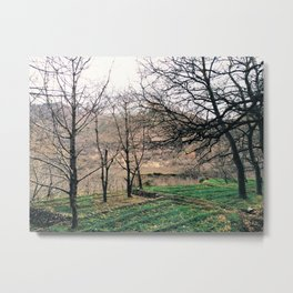Apple Fields Metal Print