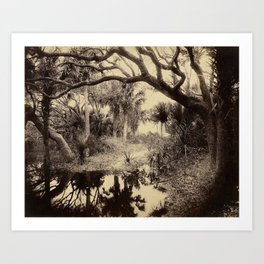 Live Oaks And Palmetto Everglades Florida 1886 - Vintage Photo By George Barker Art Print