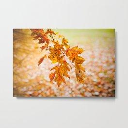 Orange Leaves Metal Print
