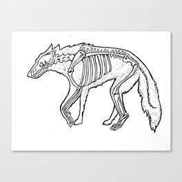 Wolf skeleton Canvas Print