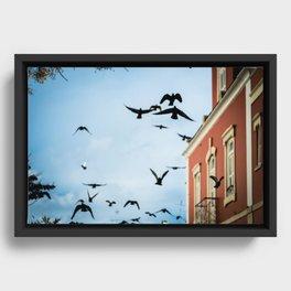 Birds in flight Framed Canvas