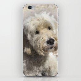 Dog Goldendoodle Golden Doodle iPhone Skin