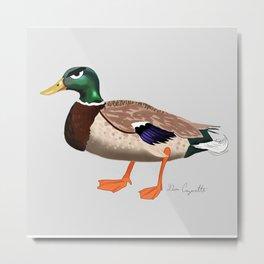 Angry duck / Le canard fôché Metal Print