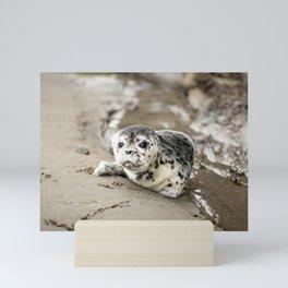 Baby Seal Pup On Sandy Beach Mini Art Print