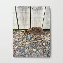 Driveway Hedgehog Metal Print