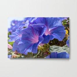 Beautiful blue petunia Metal Print