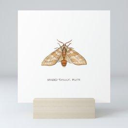 Banded Tussock Moth Mini Art Print