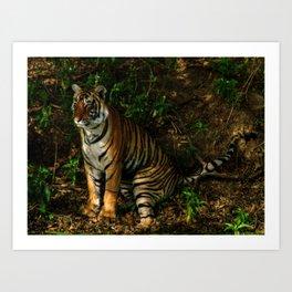 The Royal Bengal Tiger  Art Print