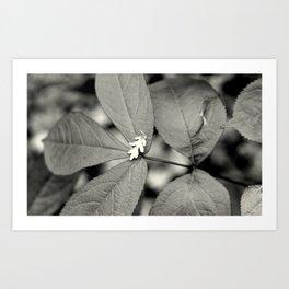 Baby Oak Leaf Black and White Art Print