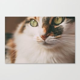 Trini the cat Canvas Print