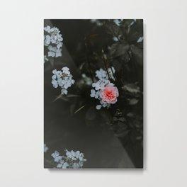 Little Pink Flower (Color) Metal Print