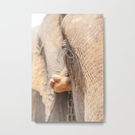 eye of elephant Metal Print